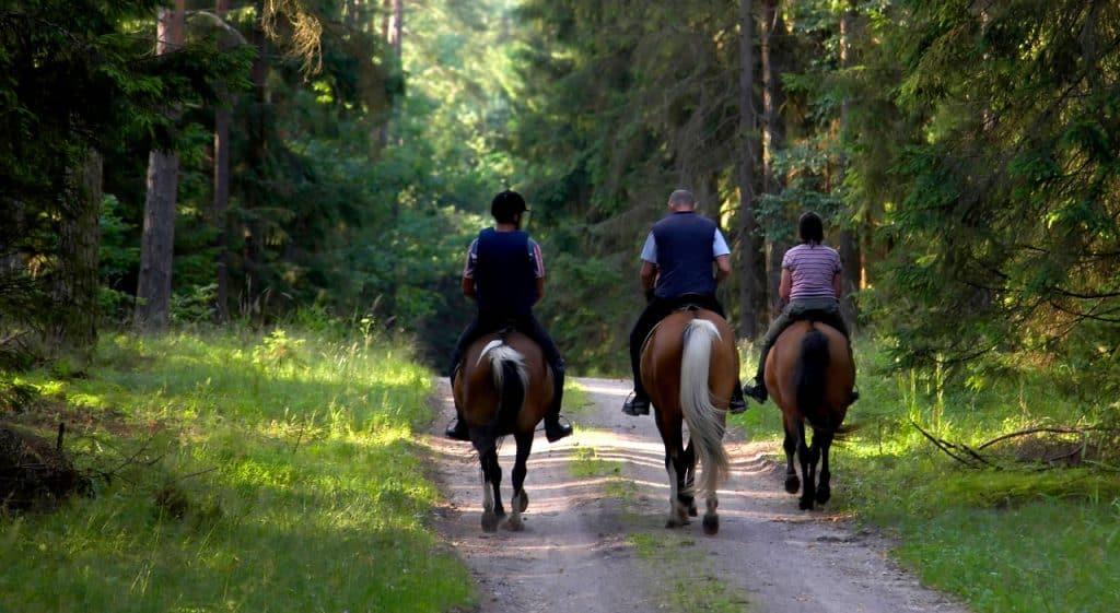 Rutas a caballo en Vall de Boí.